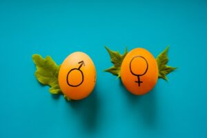 tow brown eggs on a blue background with male and female symbols on illustratinggender swaying